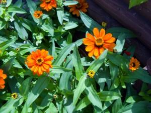 庭に咲いたオレンジ色の花